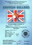 Сертификат участника игрового конкурса по английскому языку «British Bulldog»: Бударалин Максим