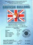Сертификат участника игрового конкурса по английскому языку «British Bulldog»: Каширина Мария