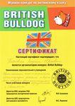 Сертификат подтверждает, что Терновая Лариса Юрьевна является организатором конкурса «British Bulldog»